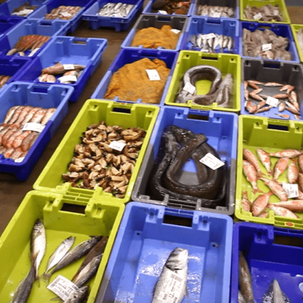 arrivage-bac-criee-poissonnerie-paon